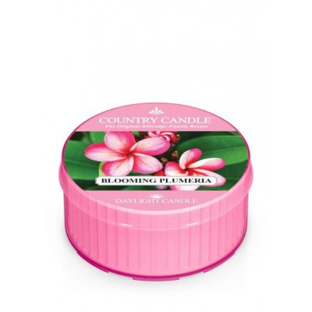 Blooming Plumeria Daylight Country Candle