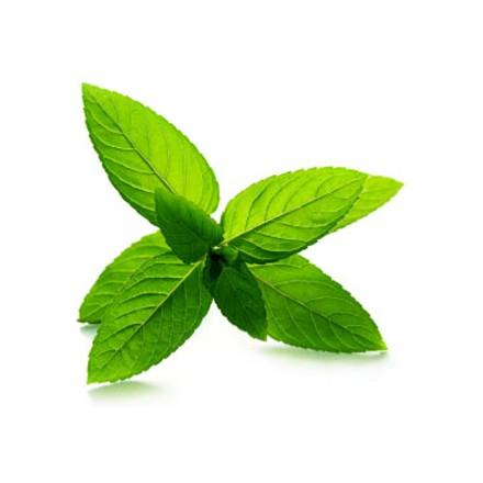 Olej do masażu Zielona Herbata 200ml