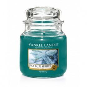 Icy Blue Spruce słoik średni
