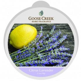Citrus Lavender wosk Goose Creek